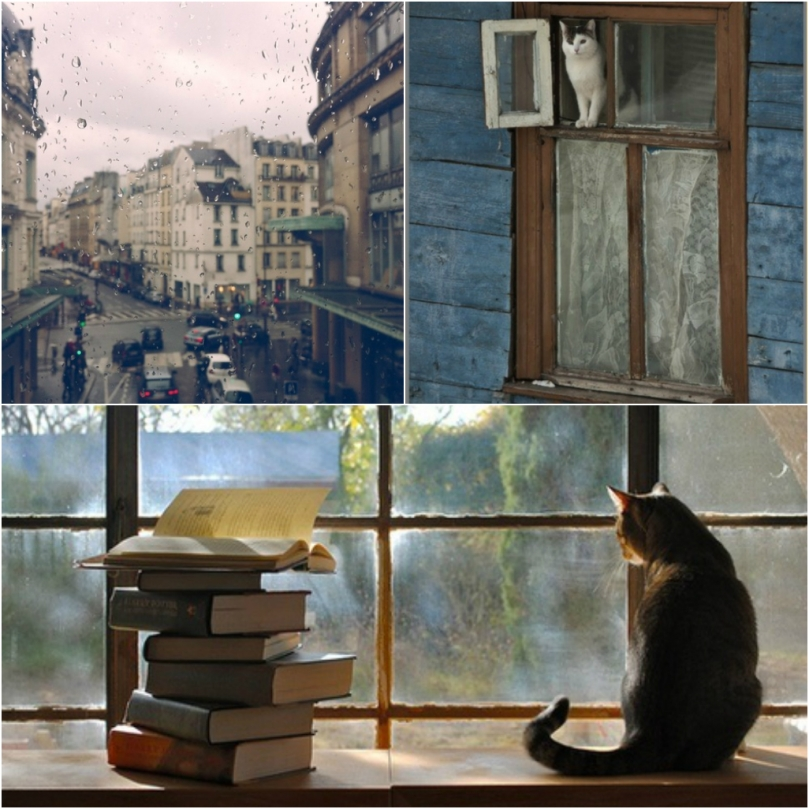 collage_photocat3
